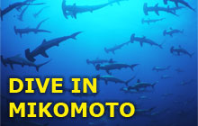 Best Place to See Hammerhead Sharks near TOKYO