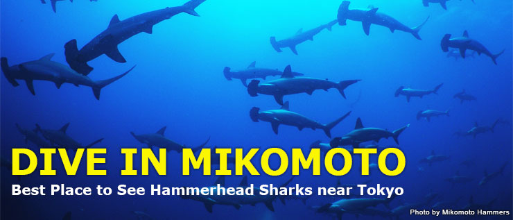 Shark Scramble only 2hours away from TOKYO Diving in ITO