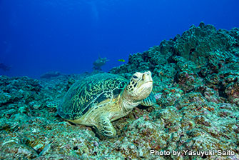 Must-go place if you're a sea turtle lover!