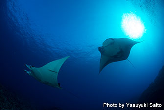 "Dive sites are less than 20 min. away from the port by boat. You can get to ""Manta station"" in less than 10 min."