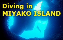 The Mecca of Cave Diving in Japan and a Coral Paradise!