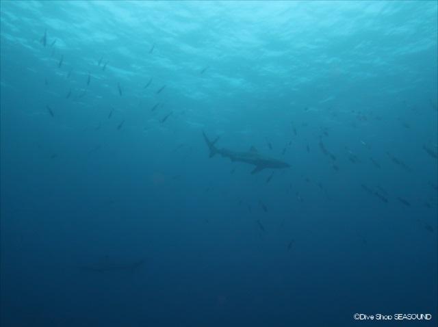 Sharks on January 12th