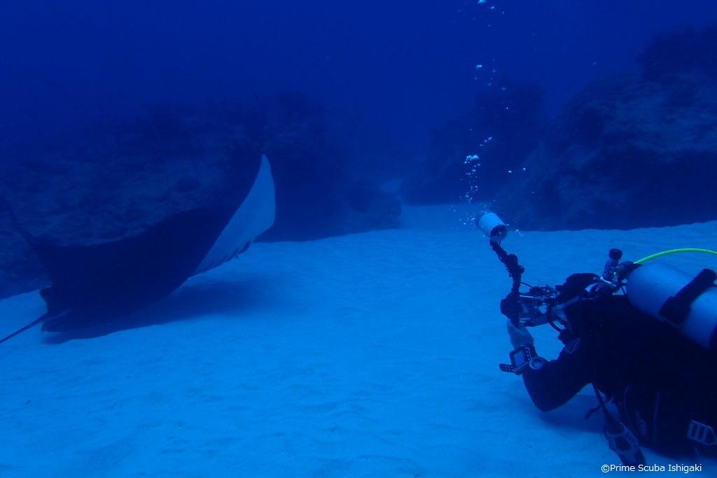 Manta ray so close
