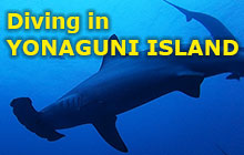 Diving in Yonaguni Island